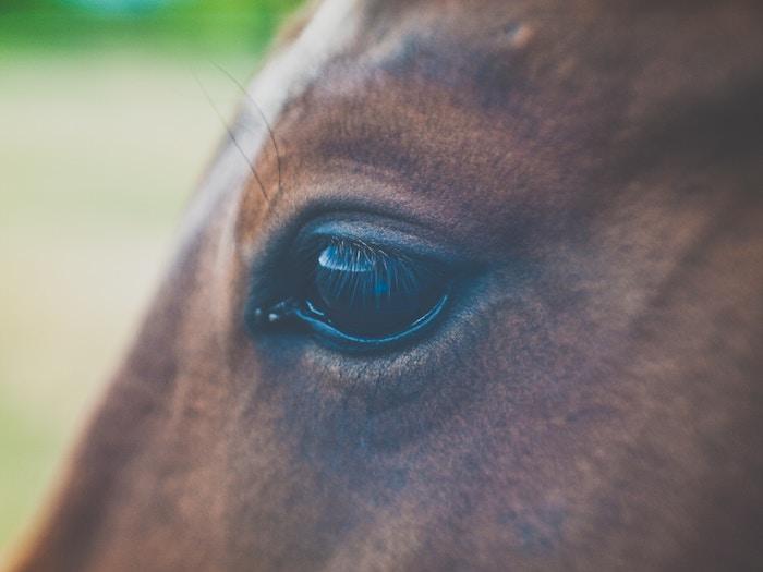 眼精疲労対策のおすすめ目薬を紹介する