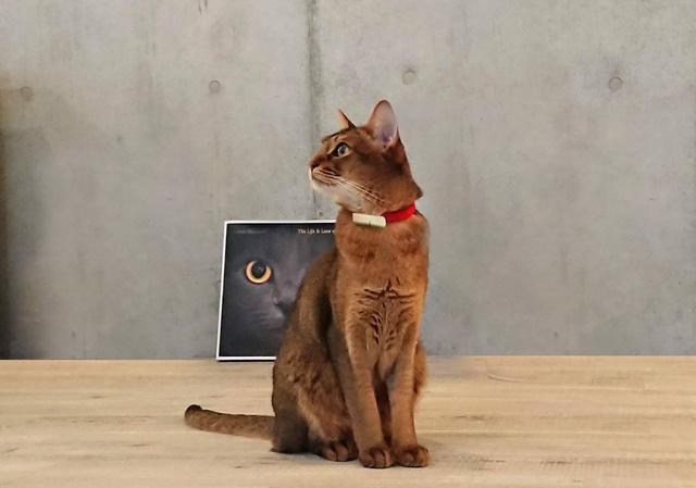 【愛猫家必見】外出時でも猫の様子を確認できる『Catlog』が便利!