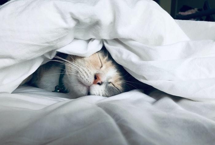 寝る前スマホを防ぐ必須のiPhone設定をして睡眠を妨げないようにしよう!
