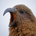 【AWS】Amazon Pollyで入力したテキストを音声に変換する