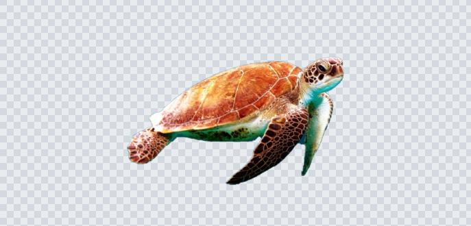 windowsのペイント3Dで画像を透過させる方法!マジック選択で物体を選択してやろう!